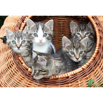 Puzzle  Grafika-Kids-00521 Kittens in a Basket