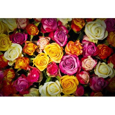 Puzzle  Grafika-Kids-00943 XXL Pieces - Roses