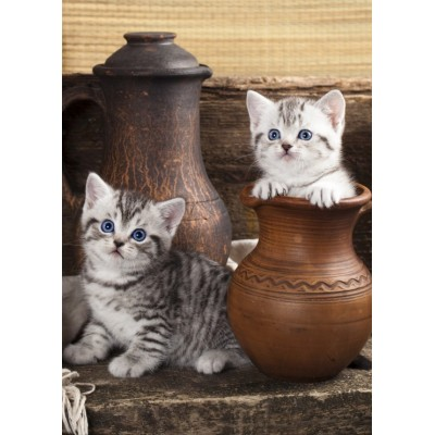 Puzzle  Grafika-Kids-01133 Magnetic Pieces - Kitten in Pot