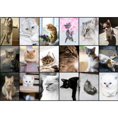 Puzzle  Grafika-T-00100 Collage - Chats