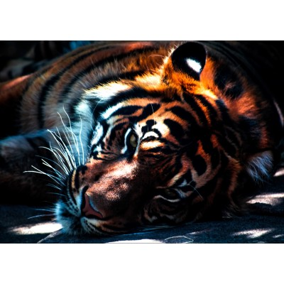 grafika-Puzzle - 24 pieces - Tiger