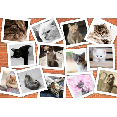 grafika-Puzzle - 12 pieces - XXL Pieces - Cats
